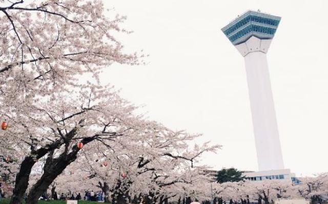 北海道樱花