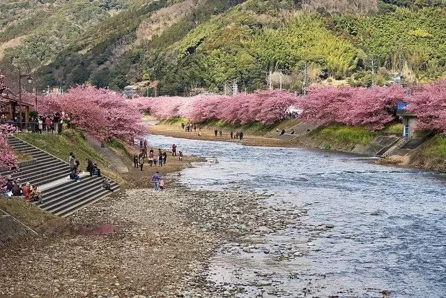 日本樱花什么时候开