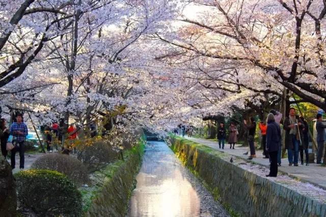 京都<a href=