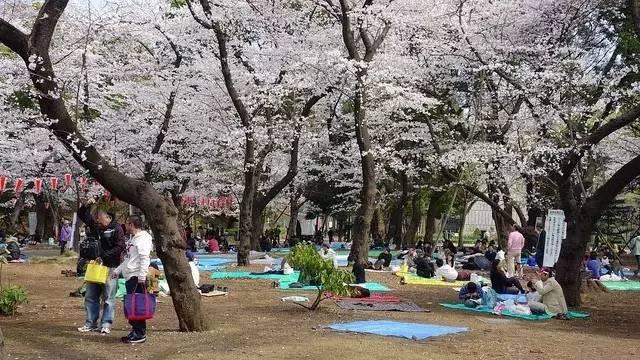 上野公园樱花祭