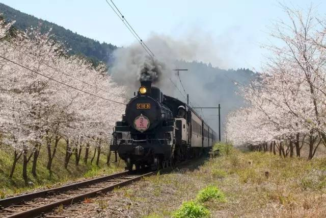 日本樱花铁路