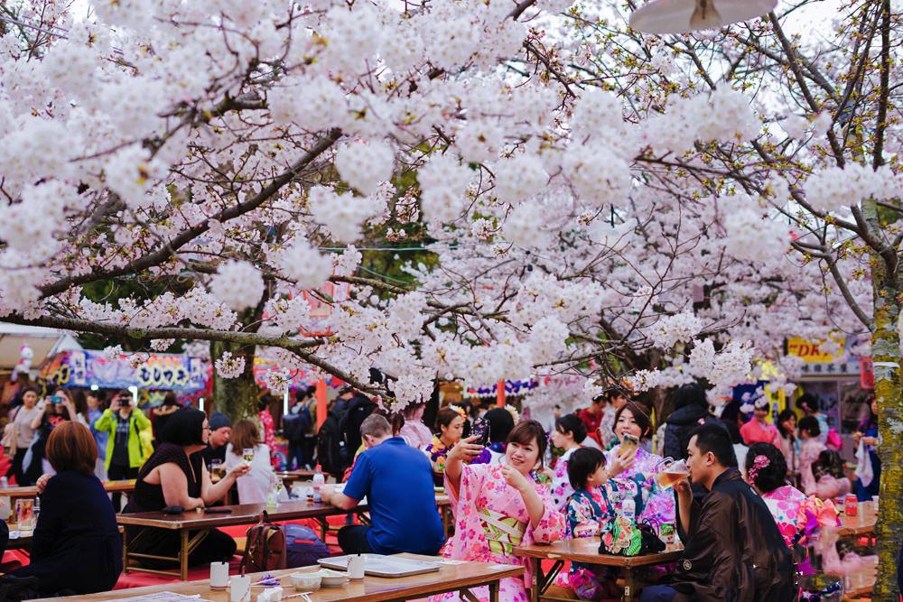 京都圆山公园