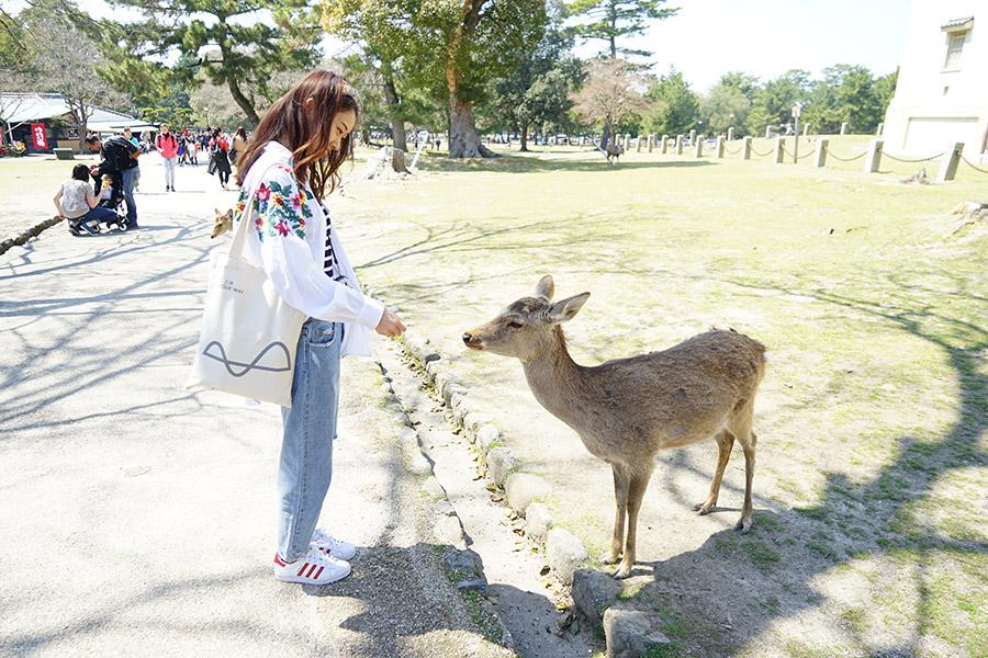 <a href='https://www.uniqueway.com/countries_pois/wkOPaWGQ.html'>奈良公园</a>