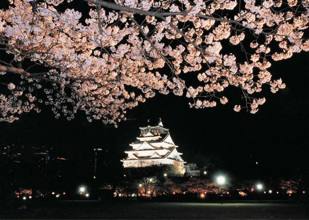 大阪城樱花