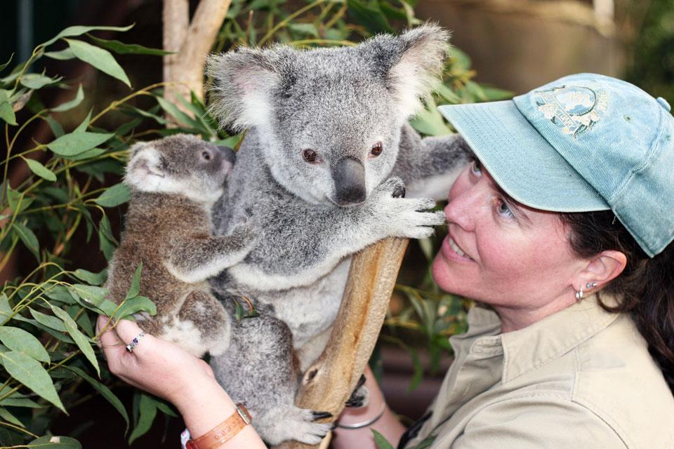 龙柏考拉动物园