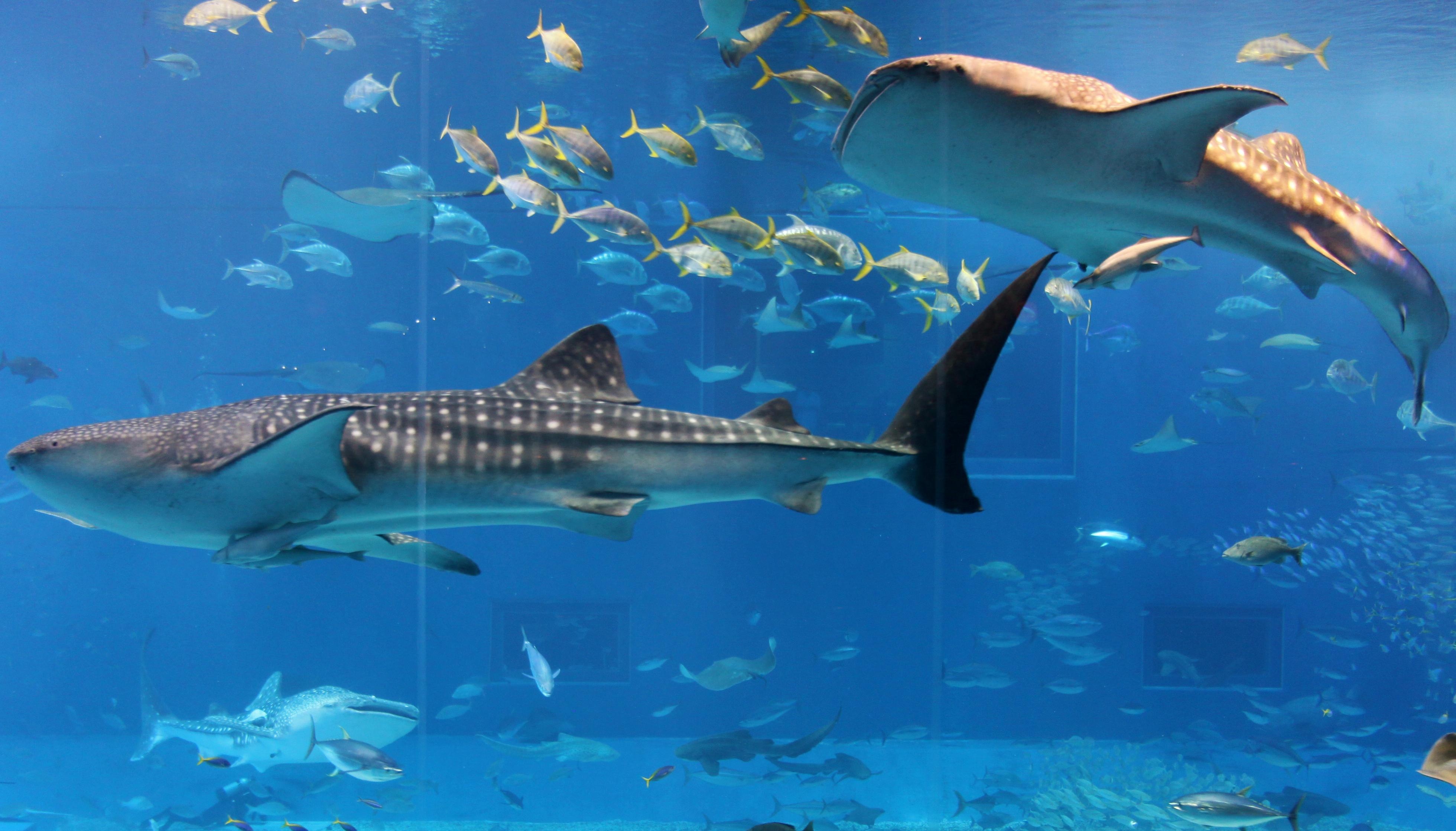 壁纸 海底 海底世界 海洋馆 水族馆 桌面 3920_2238