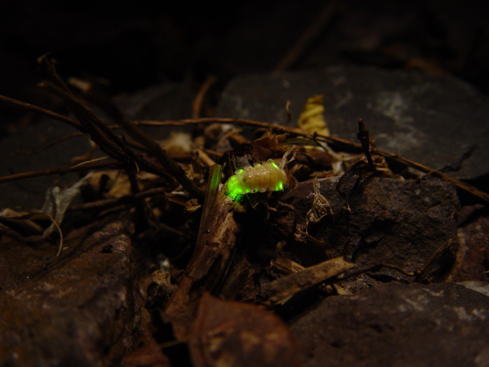 萤火虫森林夜游