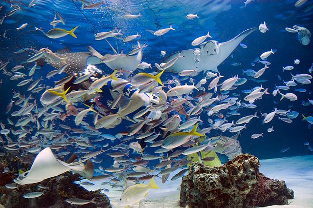 壁纸 海底 海底世界 海洋馆 水族馆 桌面 640_426
