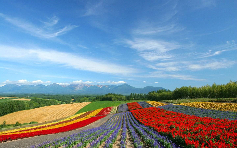 皮山农场的风景