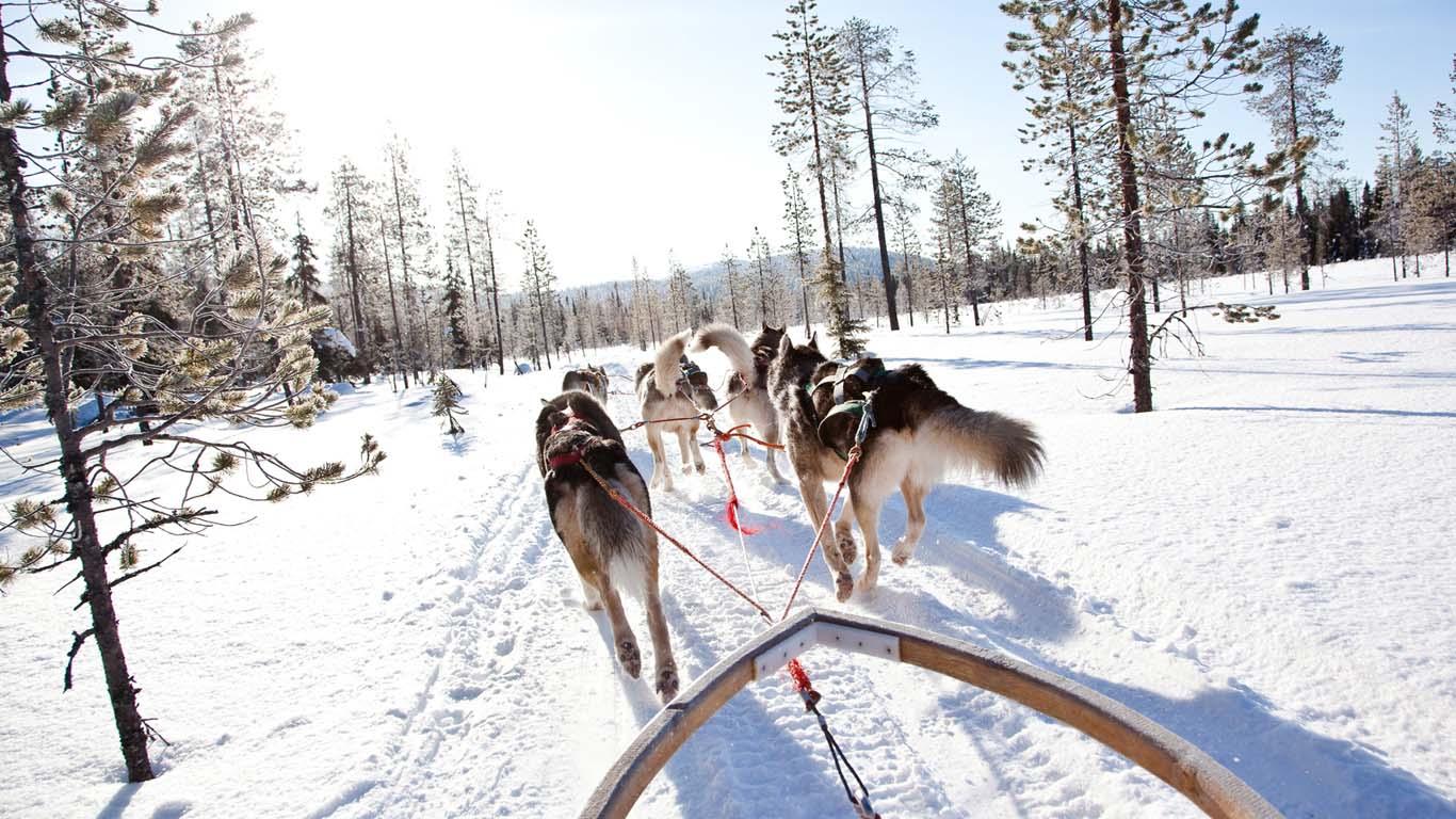 参加Visitinari公司的Husky Safari狗拉雪橇活动