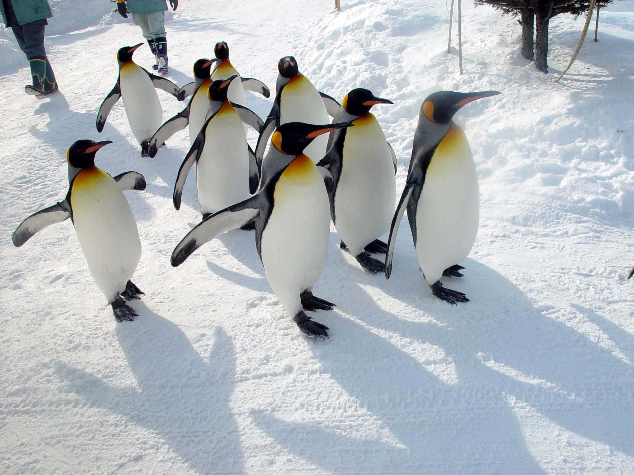 「旭山動物園」的圖片搜尋結果