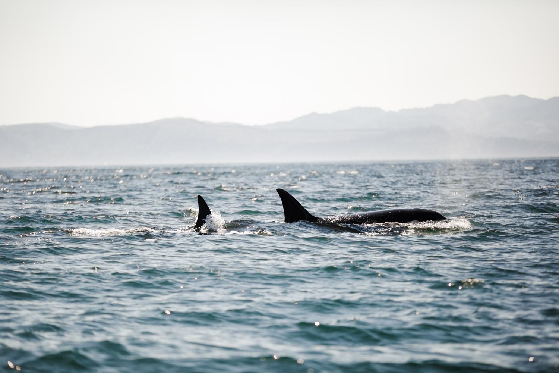 参加虎鲸奇遇公司的赏鲸旅行