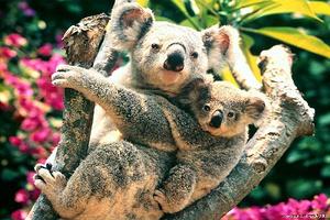 澳大利亚 10天 休闲之旅 趣味亲子游