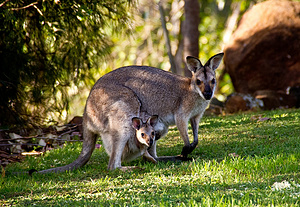 澳大利亚 10天 大手拉小手的夏日寒假