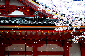 日本 6天 在霓虹的初春携手看花开花落