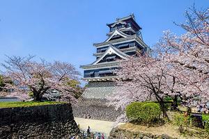 在樱花绽放的九州,和熊本熊约会