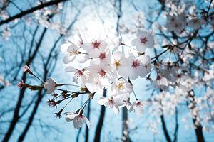日本 7天 落樱缤纷中的惬意时光