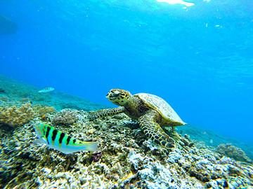 参加Cruise mar的海龟tour