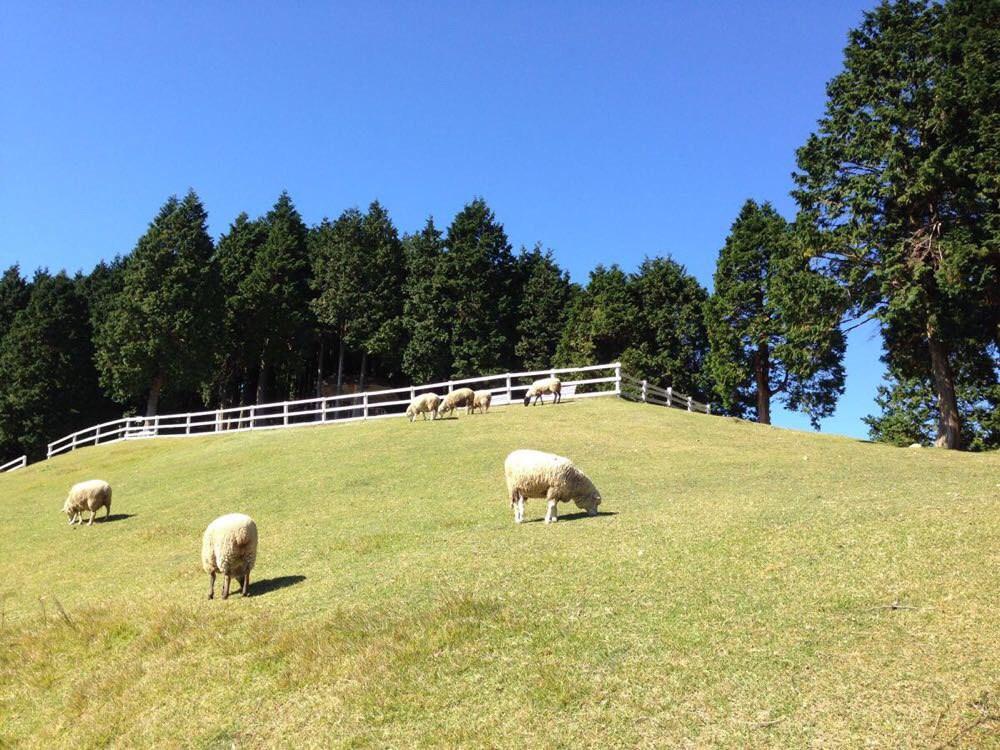 六甲山 牧場