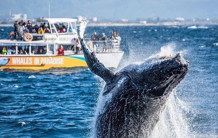 舒适难忘观鲸体验