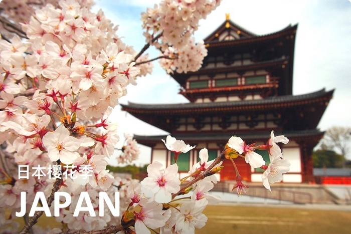 樱花樱花想见你~日本关西8日经典赏樱定制游